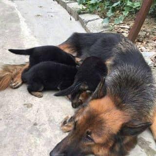 1 tháng tuổi cần tìm chủ của trungtranquang2 tại Lạng Sơn - 2058262