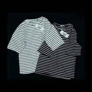 áo phông kẻ trắng new của lammthanhh4 tại Hải Phòng - 3582569