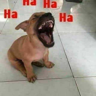 Bán cún của huavyphong tại Hồ Chí Minh - 3363629