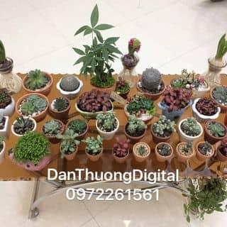 Bán xương rồng các loại... DanThuongDigital Phố Cao Phù Cừ của danthuongdigital tại Hưng Yên - 2395781