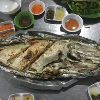 Cá bò gia của lepi2 tại Xã Vĩnh Hải,  Huyện Ninh Hải, Huyện Ninh Hải, Ninh Thuận - 942601