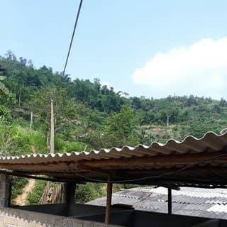 Canh  que của manhdavo tại Shop online, Huyện Yên Sơn, Tuyên Quang - 3479112