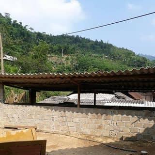 Canh que của manhdavo tại Shop online, Huyện Yên Sơn, Tuyên Quang - 3479223