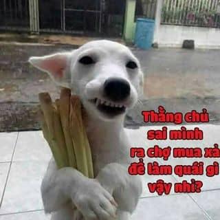 chó hàn quốc của nghingo3 tại Shop online, Huyện Bù Gia Mập, Bình Phước - 1109792