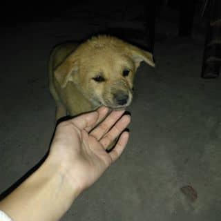 Chó ta ạ. của thuyduong619 tại Quảng Ninh - 2279934