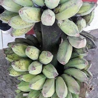 Chuối shap nhà trô g của bichngocnguyen42 tại 492 21 Tháng 8,  Phước Mỹ, Thành Phố Phan Rang-Tháp Chàm, Ninh Thuận - 4525675