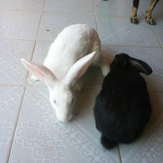 Đen trắng thỏ của chuoixanh2 tại Tây Ninh - 1772793