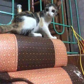 Em mèo của ngocoanh91 tại Hưng Yên - 3639538