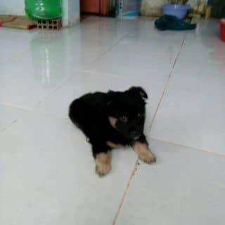 Em tên vin của siusuhua tại Shop online, Quận Hải Châu, Đà Nẵng - 1284923