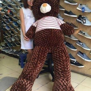 Gấu bông của kendytrang tại Hải Phòng, Quận Đồ Sơn, Hải Phòng - 2203076