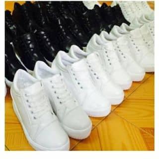 Giày thể thao 7cm của cochong tại Hà Nam - 3818018