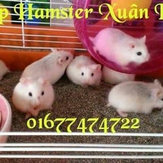 Hamster cute của xuanhung1204 tại Hồ Chí Minh - 3454310