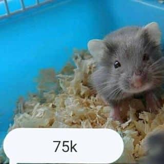 Hamster Ww giá như hình của giabao368 tại Trà Vinh - 3681501