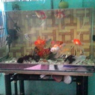 hồ cá của sakky tại Bình Dương - 2078523