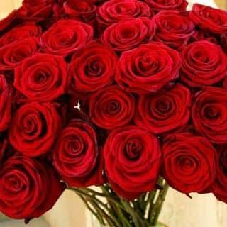 Hoa hồng giấy của kelvinkhanh11 tại Dĩ An, Huyện Dĩ An, Bình Dương - 1830346