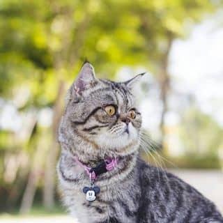 Mèo exo đực của nguyenyen566 tại Đại lộ Bình Dương, Huyện Thuận An, Bình Dương - 3831548