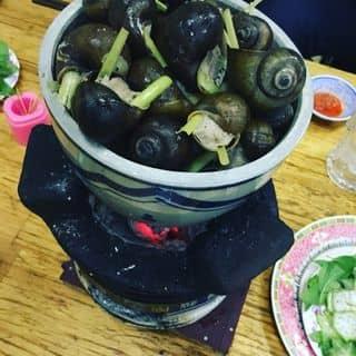 Ốc ngồi thịt của lynbyul tại 157 Hai Bà Trưng, Phường 6, Thành Phố Đà Lạt, Lâm Đồng - 459279
