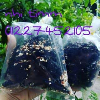 Rong biển chấy tỏi của hnhiii tại Hồ Chí Minh - 806215