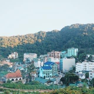 Tam đảo của meiqiu tại dốc Tam Đảo, tt. Tam Đảo, Huyện Tam Đảo, Vĩnh Phúc - 639344