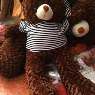 Teddy 🐻 của phuonglinh752 tại Thừa Thiên Huế - 2338306