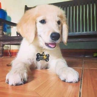 Thẻ tên đeo cho chó bằng inox của pettag tại 146 Huỳnh Văn Bánh, phường 12, Quận Phú Nhuận, Hồ Chí Minh - 3391480