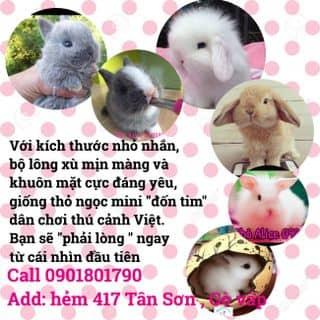 Thỏ kiểng mini của wonderlandnthm tại Hồ Chí Minh - 3861791